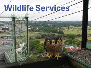 wildlife services oregon