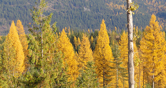 Kootenai Valleys Conservation Easement Appraisal