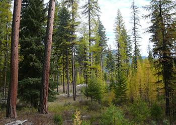 Montana Sustainable Yield
