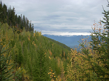 Montana Sustainable Yield Study