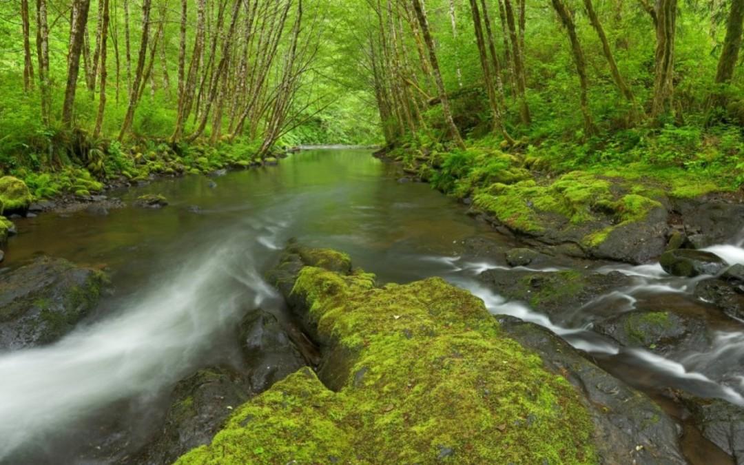 Nestucca River Fish Passage Study