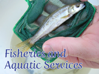 Fishereis and aquatic Services