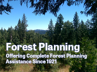 MB&G Forest Planning