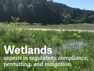 wetland consulting oregon