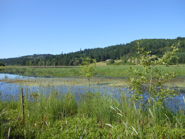 McMinnville Water & Light McGuire Reservoir Wetland Mitigation