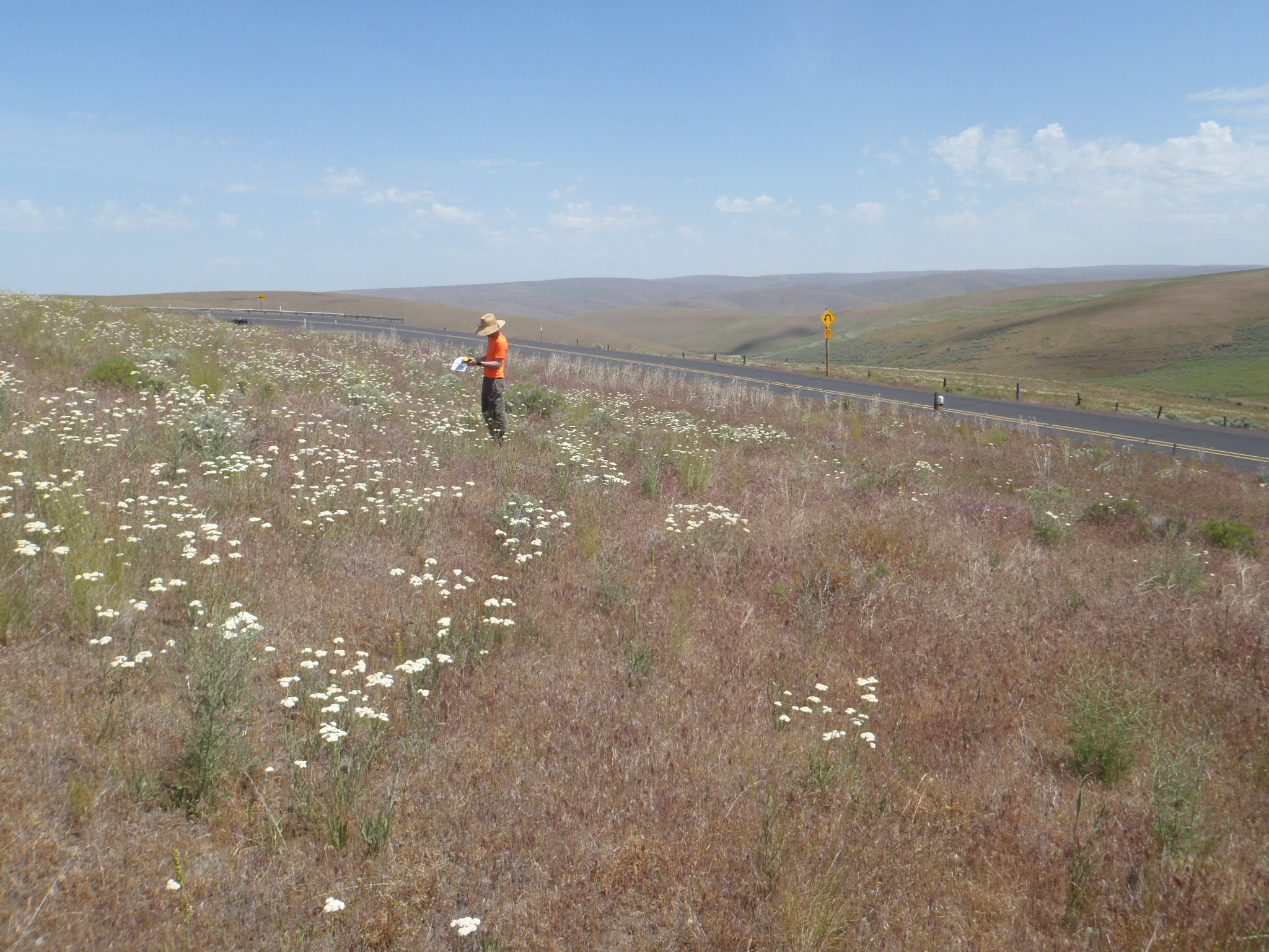 Oregon Department of Transportation Region 5 Rare Plant Surveys
