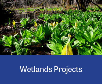 ProjectLinkGraphic_Wetlands